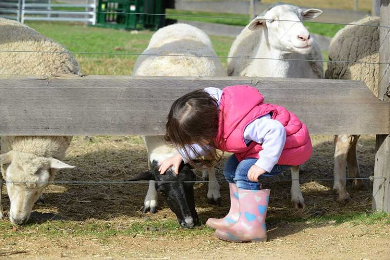 13 places kids can see animals in Melbourne